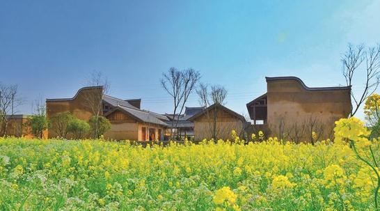 长沙县果园1200亩油菜花竞相绽放